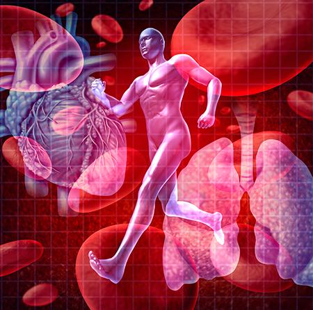 Grafik laufender Mensch, Lungen, Blutkörperchen